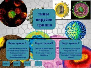 Типы вирусов гриппа
