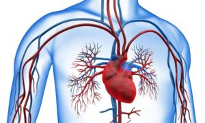 Ишемическая (коронарная) болезнь сердца