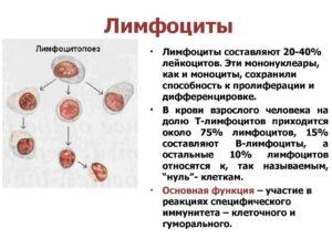 Анализ крови (широкоцитоплазменные лимфоциты))