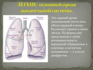 НЕ дышит правое легкое