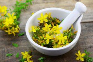 Лекарственные травы: вред и польза