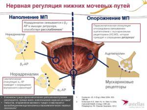 Влияние ароматерапии на мочевой тракт