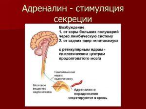 Adrenalin Адреналин (секрет надпочечников)