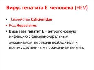 Вирус гепатита Е (HEV)