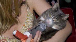 Астма и кошка в доме