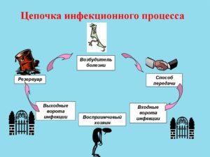Определение, условия возникновения инфекции и пути передачи возбудителя