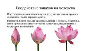Влияние запахов на настроение и здоровье человека
