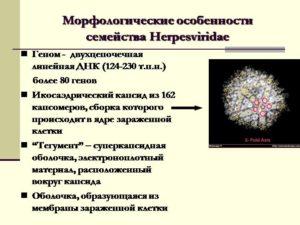 Семейство герпесвирусов (Herpesviridae)