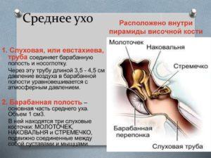 Полость среднего уха и слуховая  труба