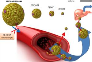 Cholesterinum (Холестерин)