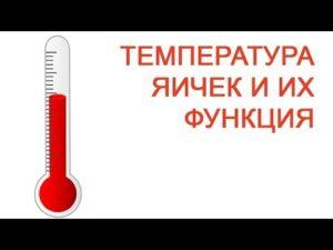 Температура яичек у мужчин