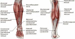 уплотнение на икроножной мышце или кости
