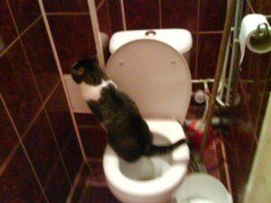 хожу в туалет по большому несколько раз за день