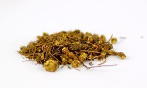 Гидрастис канадский, или желтый корень