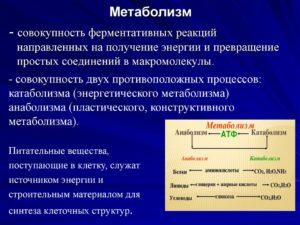 Метаболизм (продолжение...)