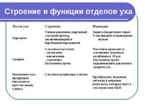 Функции  наружного, среднего, внутреннего уха