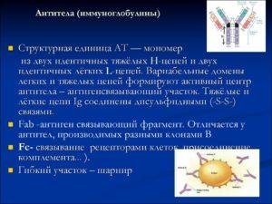 Антитела (иммуноглобулины)