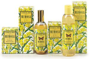Мимоза, как лечебный аромат