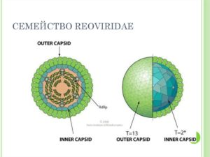 Семейство реовирусов (Reoviridae)