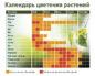 Благоприятные и неблагоприятные растения для аллергиков
