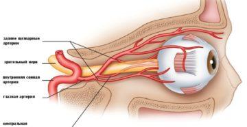 Артериальная система органа зрения