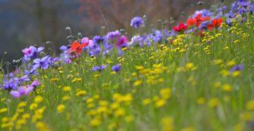 Летние травы