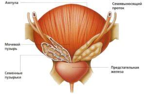воспаление семявыносящего протока